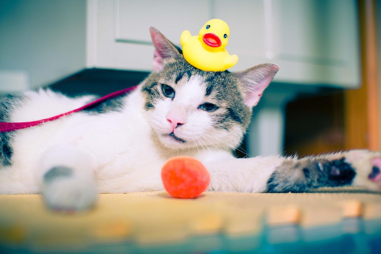 アヒル隊長と猫