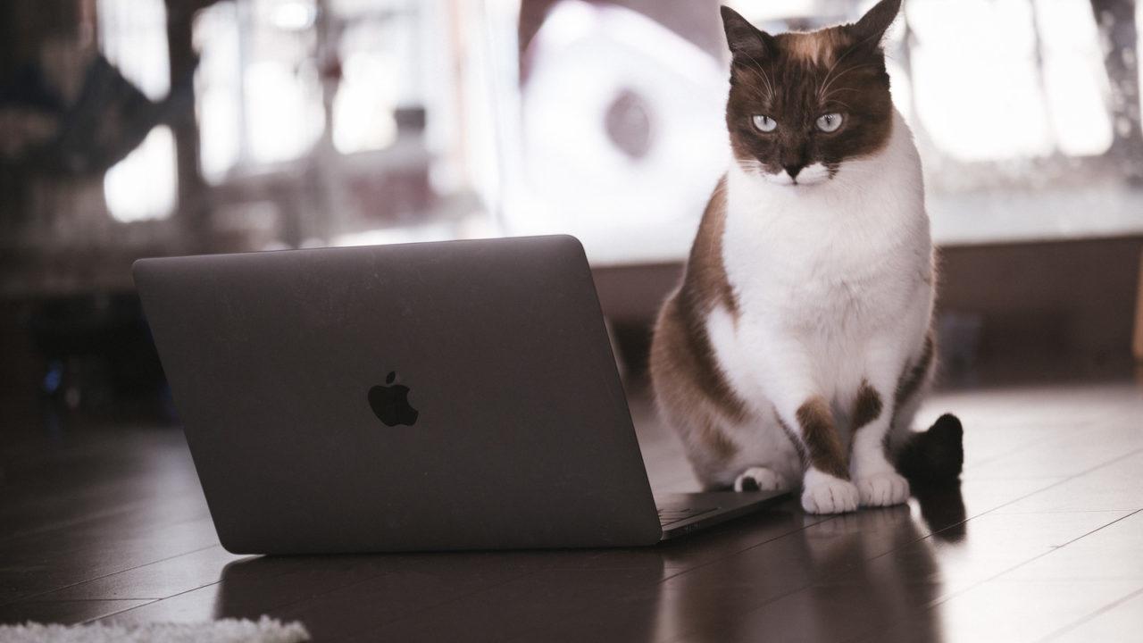 MacBookと猫