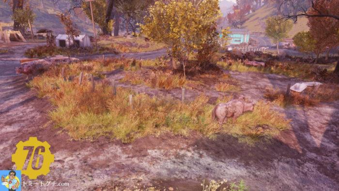 Fallout76 バラモン