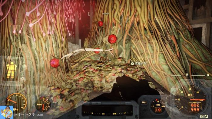 Fallout76 生い茂ったサンデューの木立