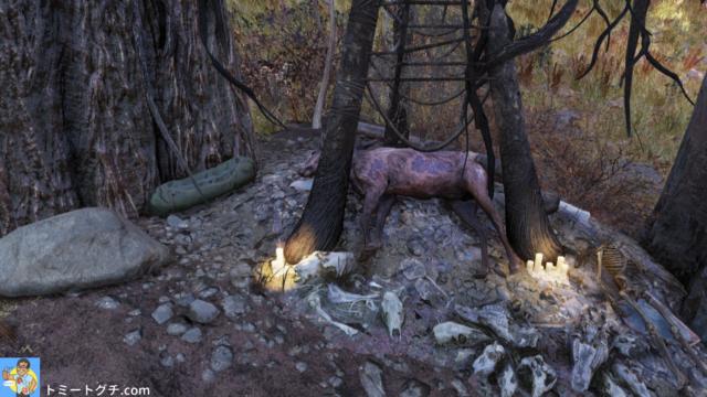 Fallout76 Wastelanders 名も無きロケーション 森林地帯